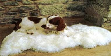 How To Clean A Genuine Sheepskin Rug Organic Comfort Market