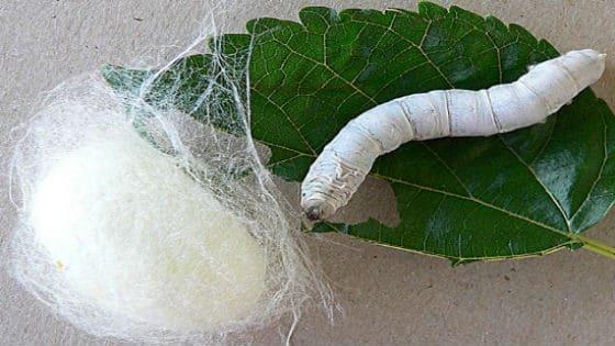 Douillette en laine pour agneau, Douillette organique pour enfant en bas âge, Douillette en laine lavable, Organic Comfort Market